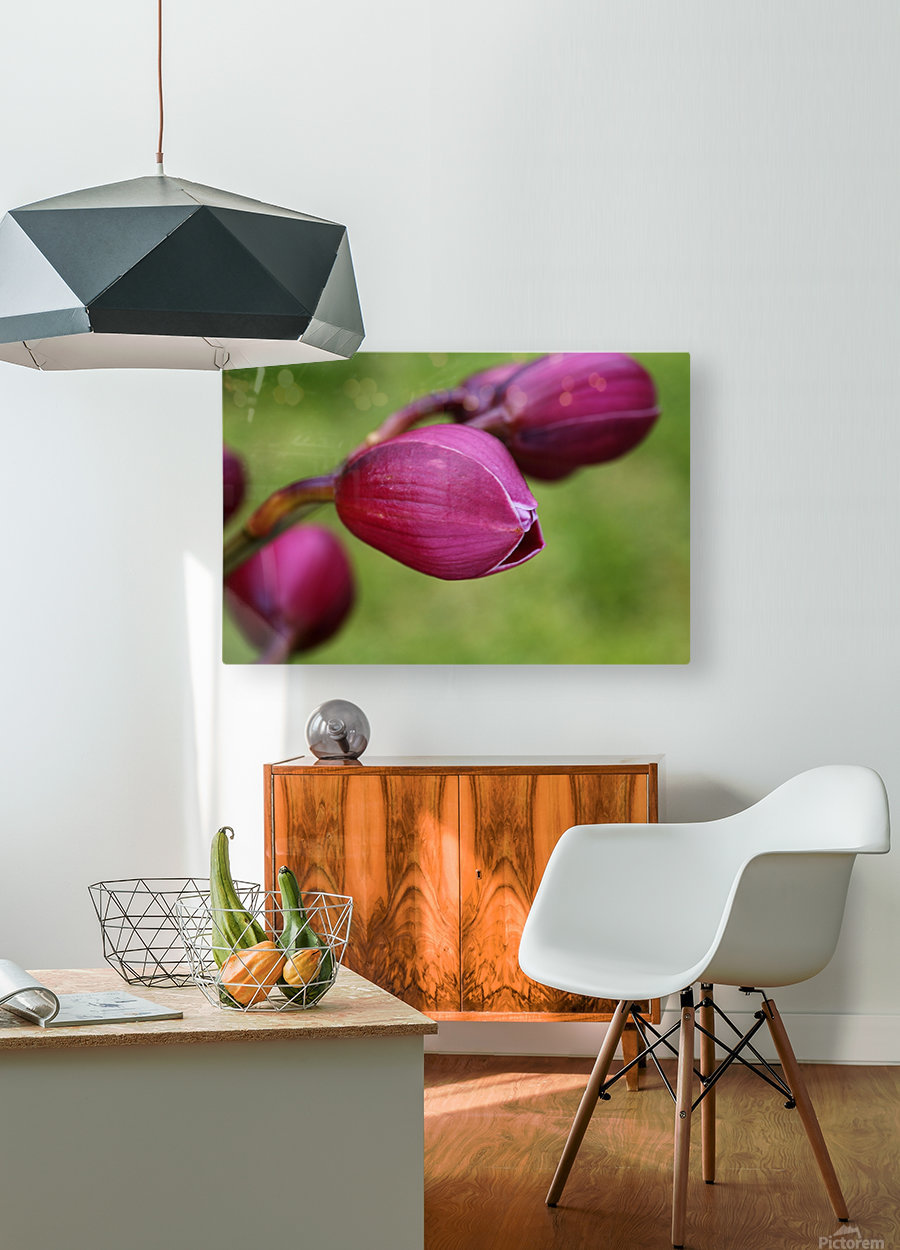 Rich Pink Orchid Buds  HD Metal print with Floating Frame on Back