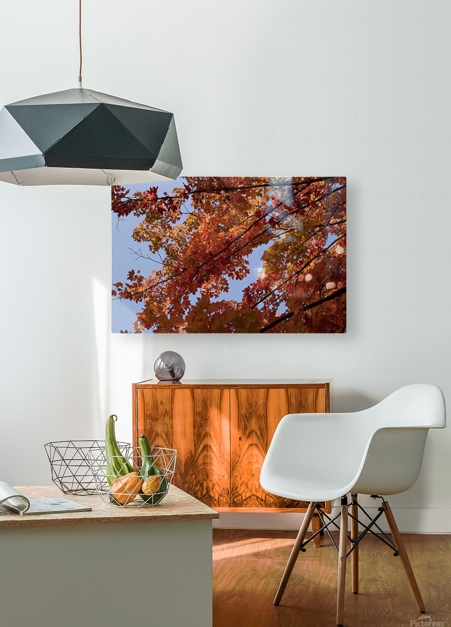 Autumn tree  HD Metal print with Floating Frame on Back