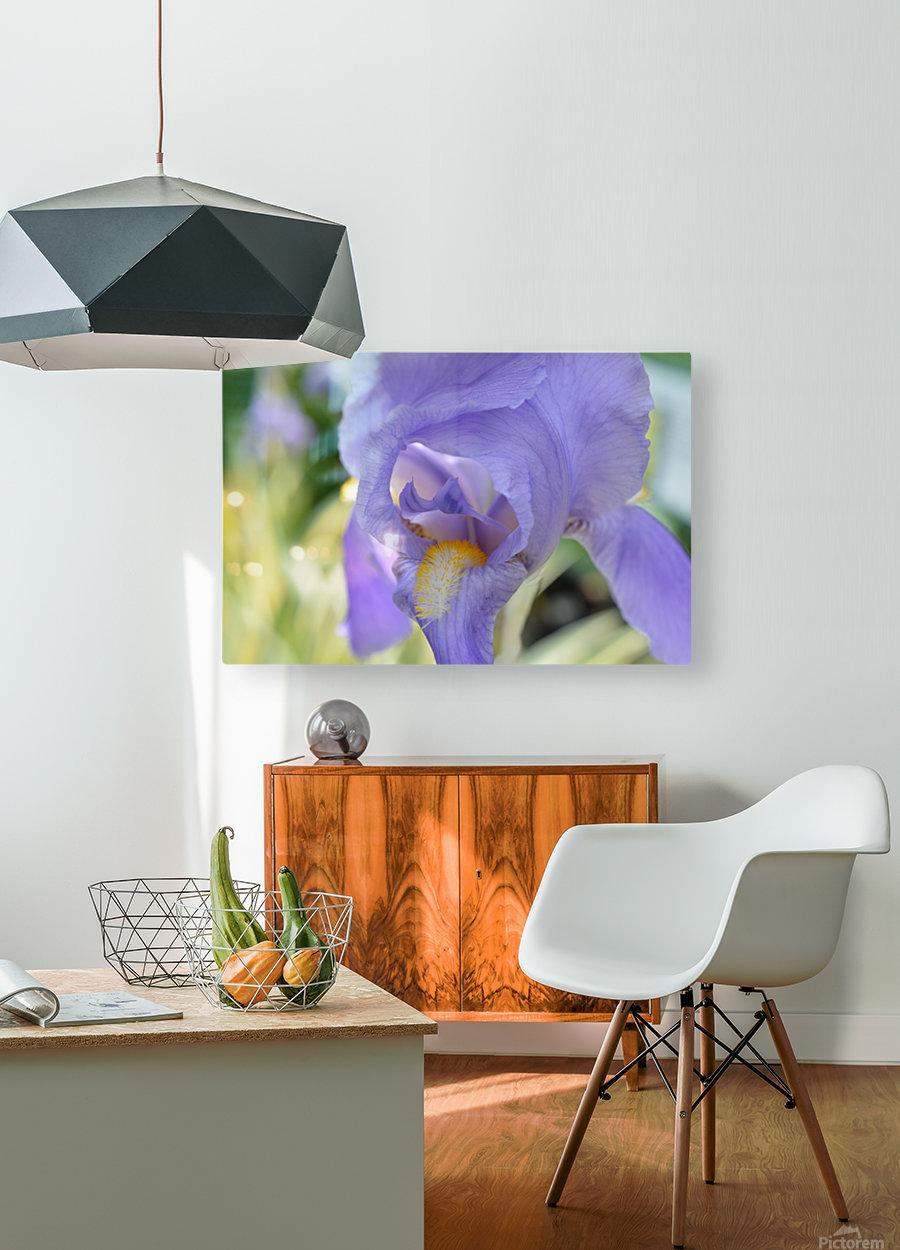 Purple Iris Photograph  HD Metal print with Floating Frame on Back