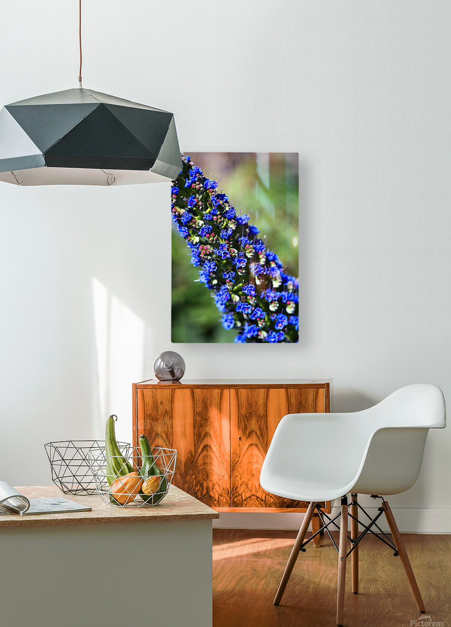 Veronica Flower Of  Spring  HD Metal print with Floating Frame on Back