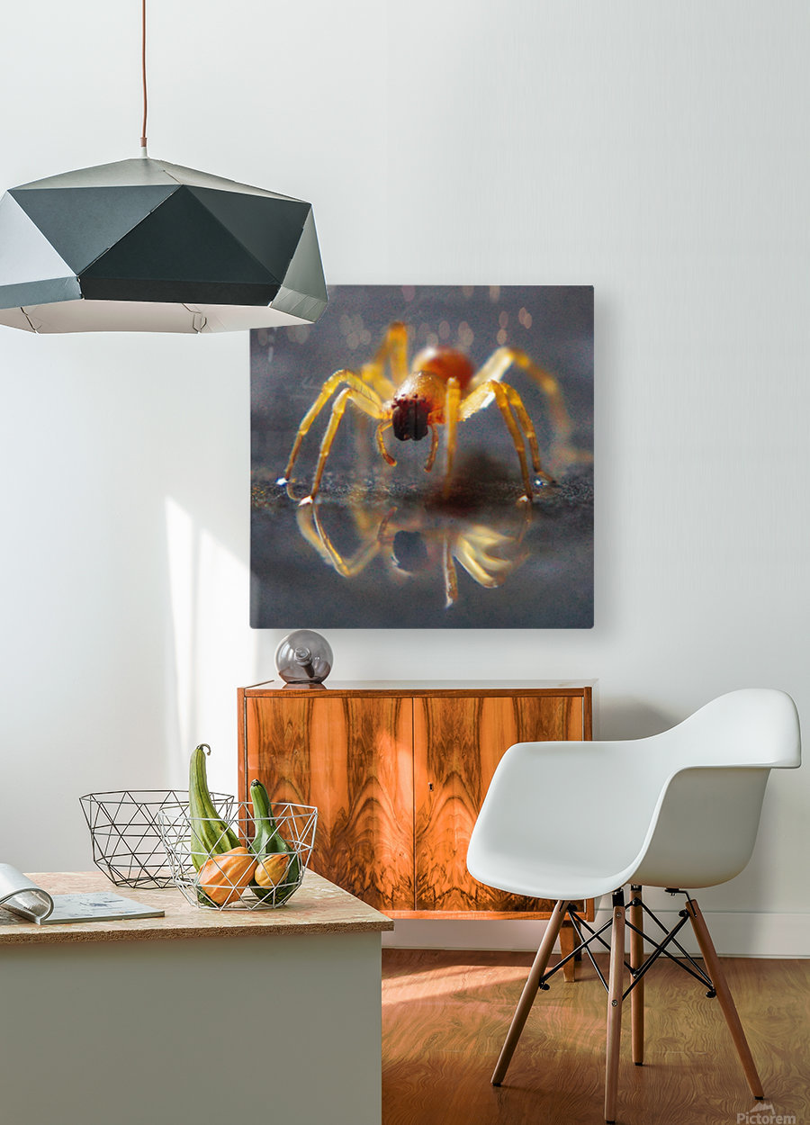 Spider reflecting  HD Metal print with Floating Frame on Back