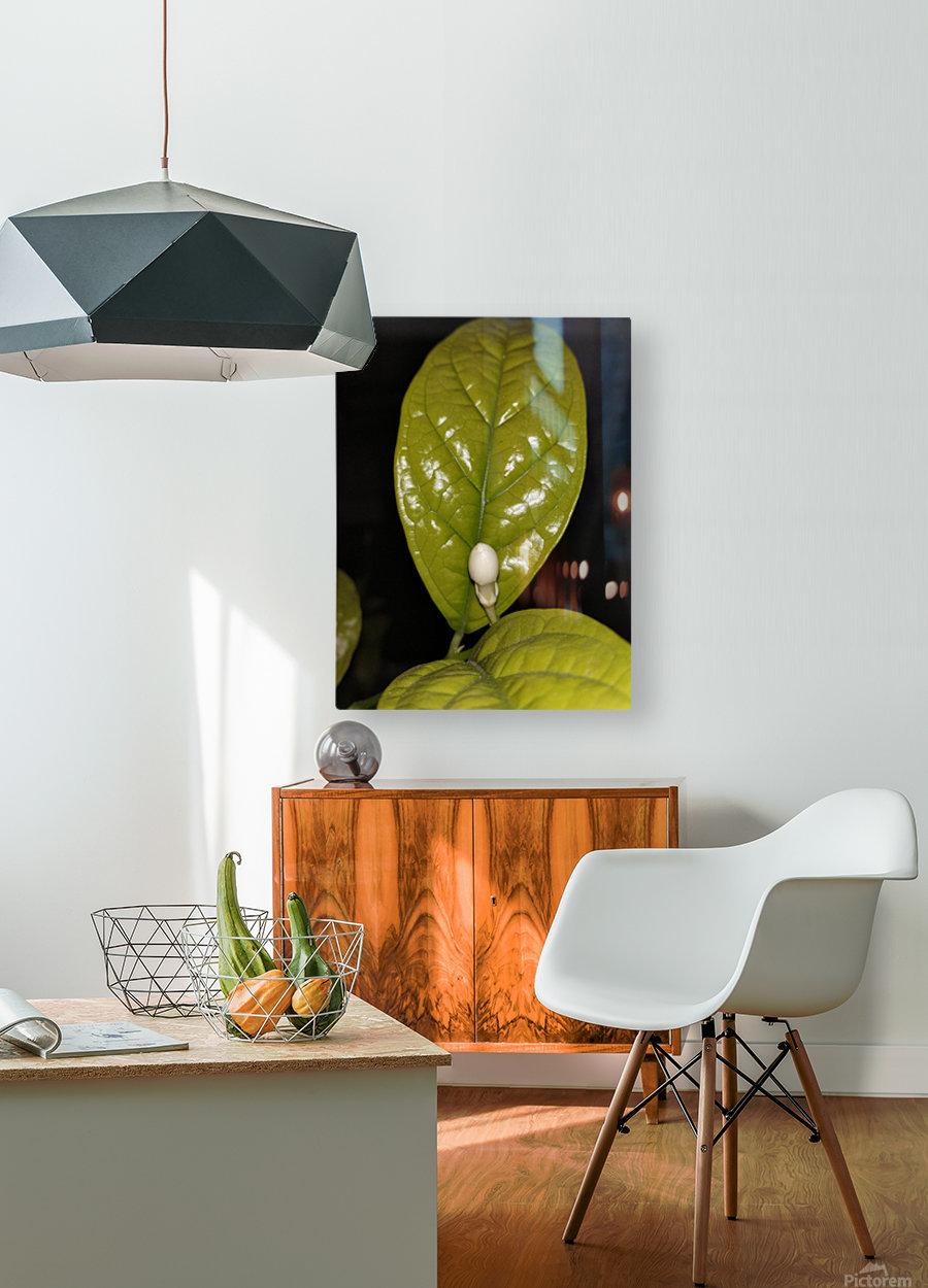 Jasmine Flower Fragrance  HD Metal print with Floating Frame on Back
