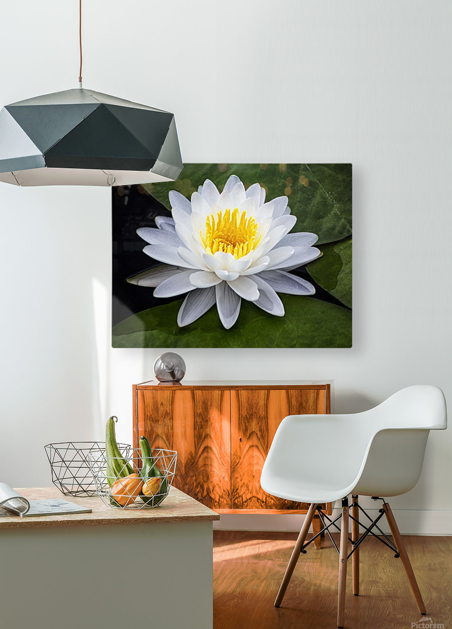 LIly  HD Metal print with Floating Frame on Back