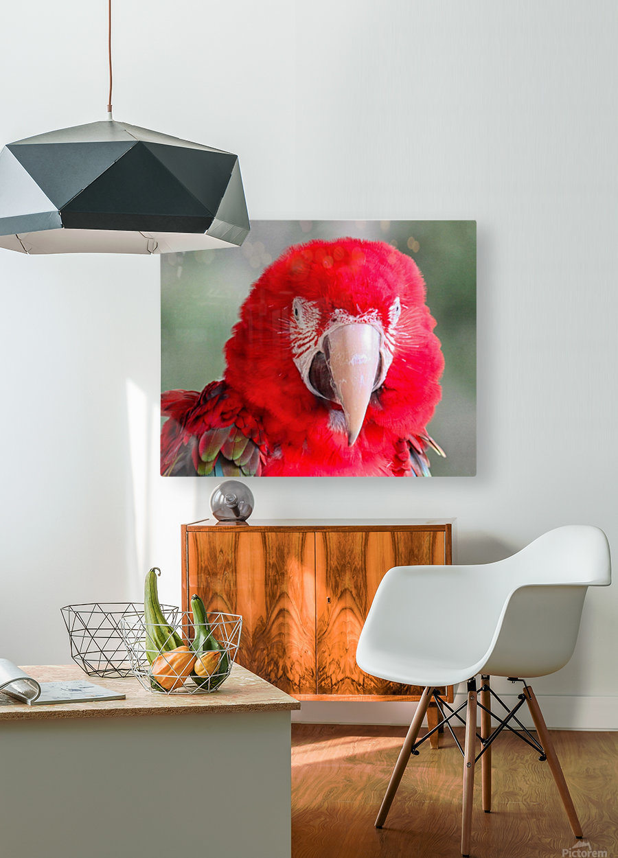 Red Parrot   HD Metal print with Floating Frame on Back