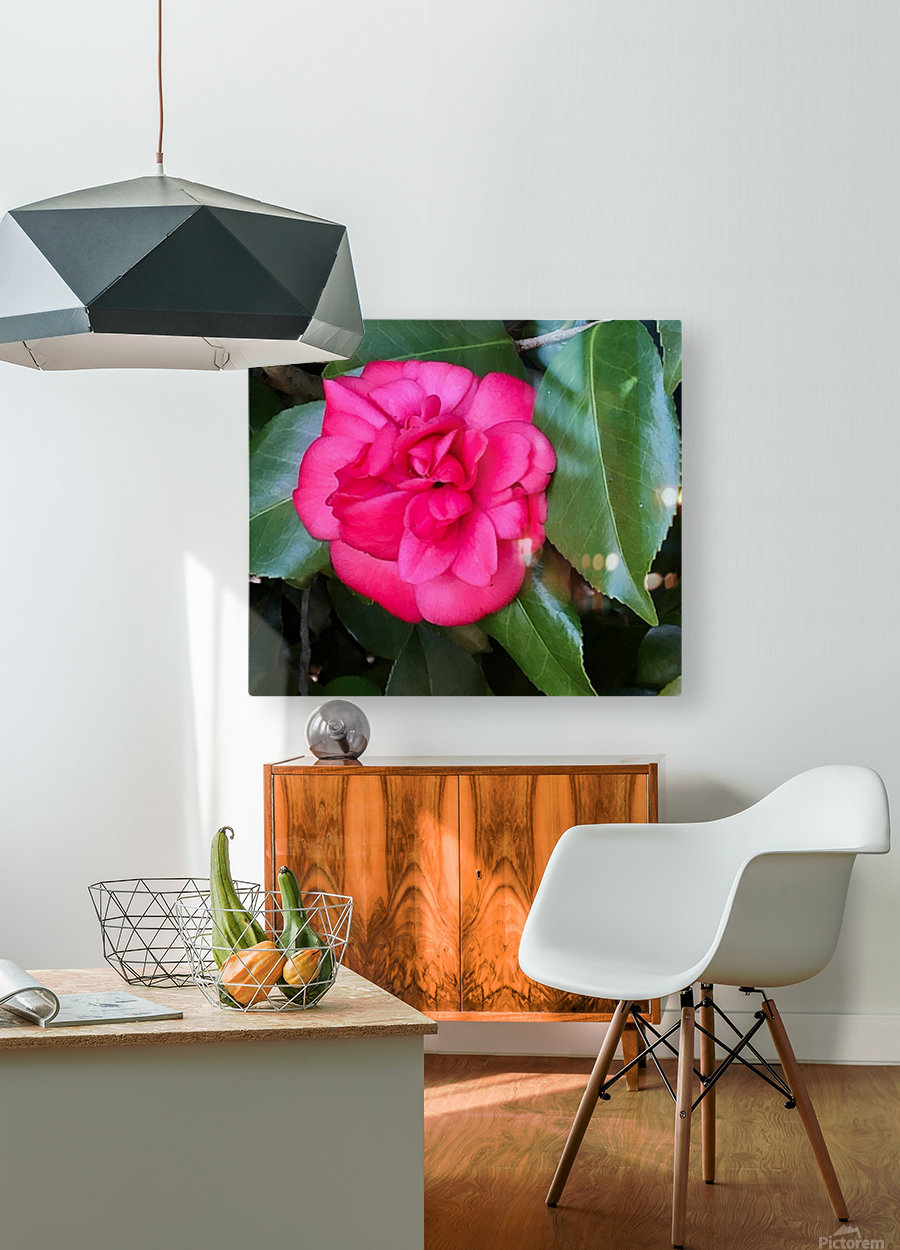 Japanese Camellia  HD Metal print with Floating Frame on Back