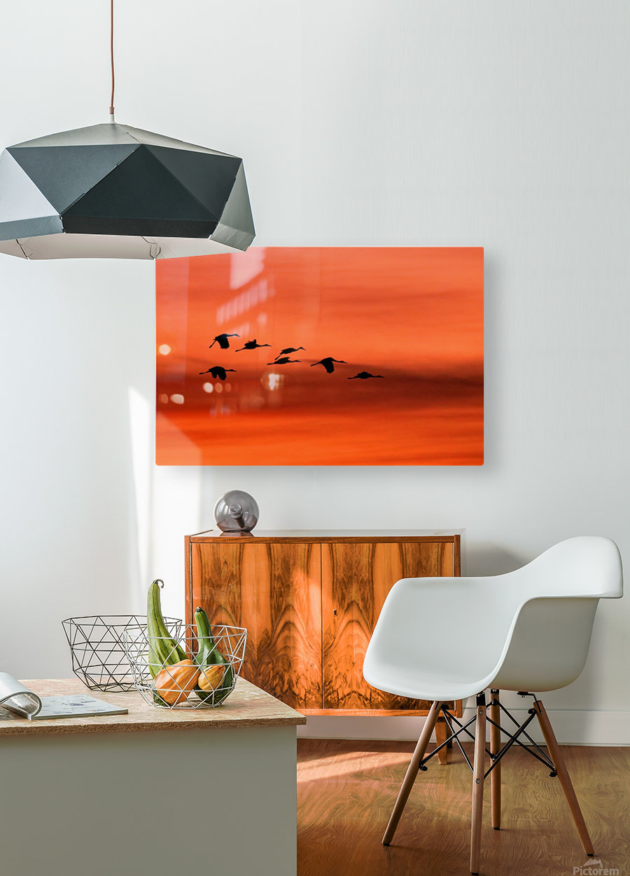 Sandhill Cranes at Sunset  HD Metal print with Floating Frame on Back