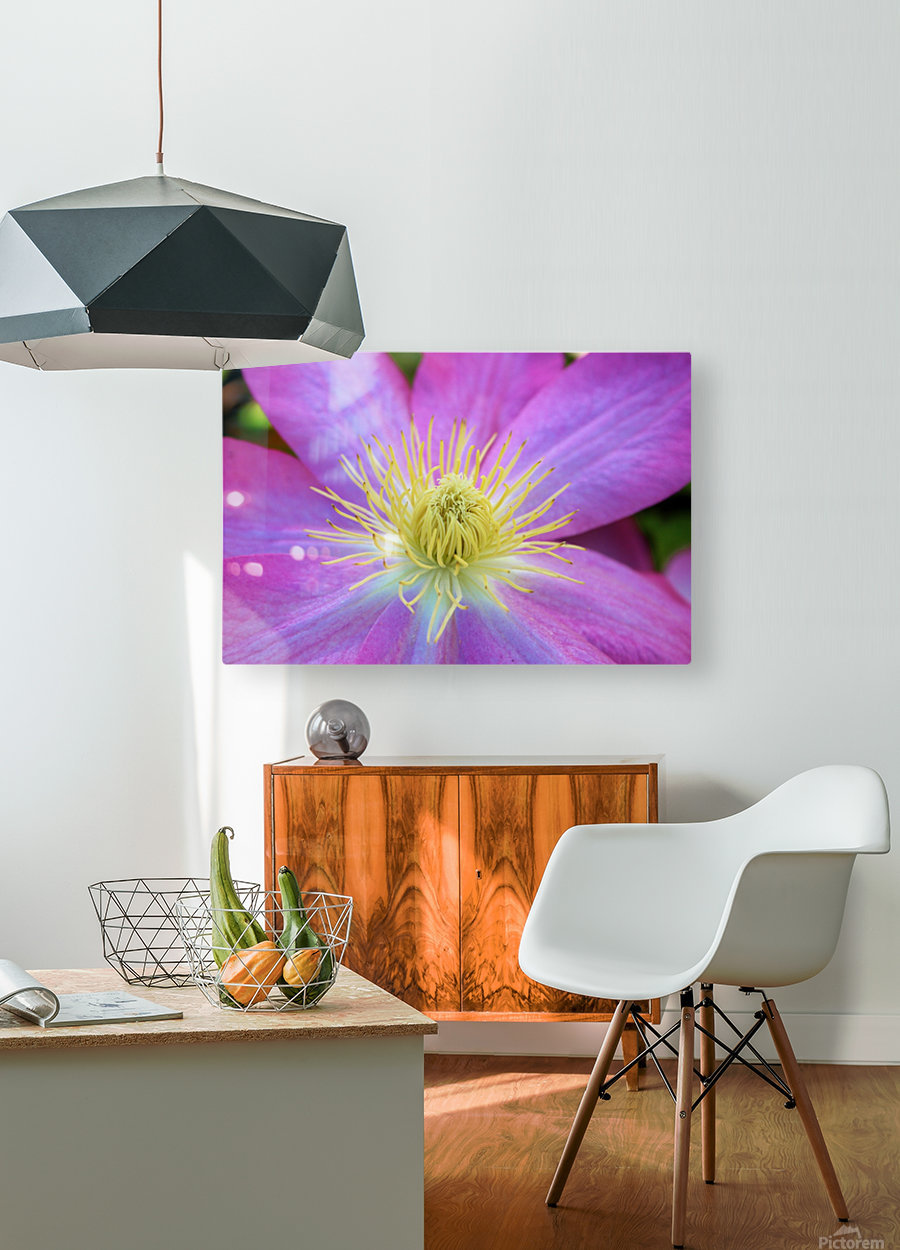 Purple Clematis  HD Metal print with Floating Frame on Back