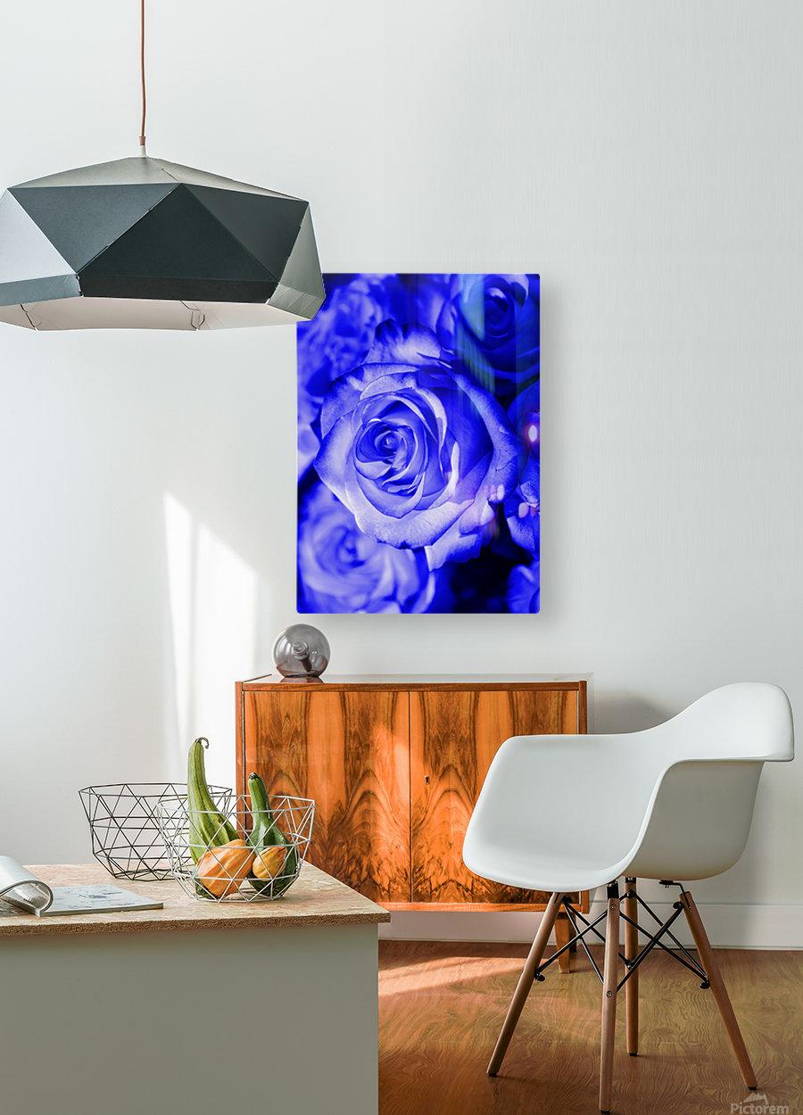 Rose blue  HD Metal print with Floating Frame on Back