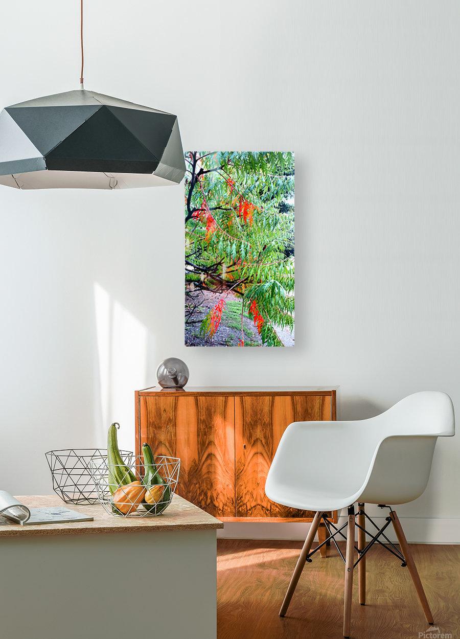 Rasta Leaves  HD Metal print with Floating Frame on Back