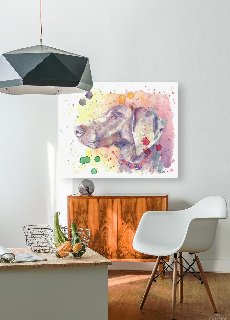Weimaraner Dog - Portrait of Nandi  HD Metal print with Floating Frame on Back