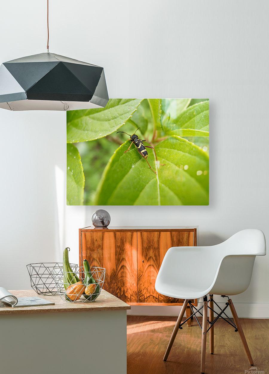 A.P.Polo - Karel Gott  HD Metal print with Floating Frame on Back