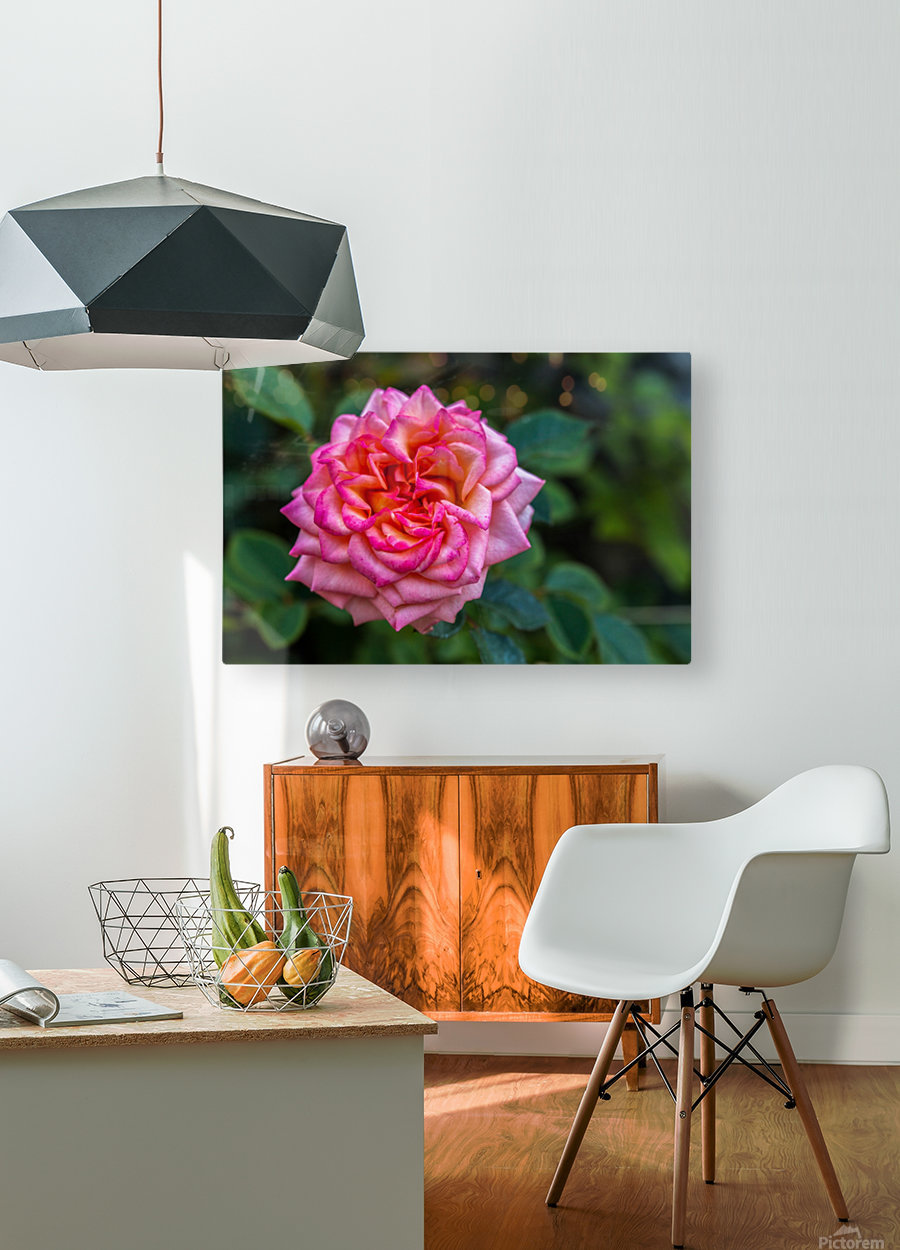 Rose  HD Metal print with Floating Frame on Back