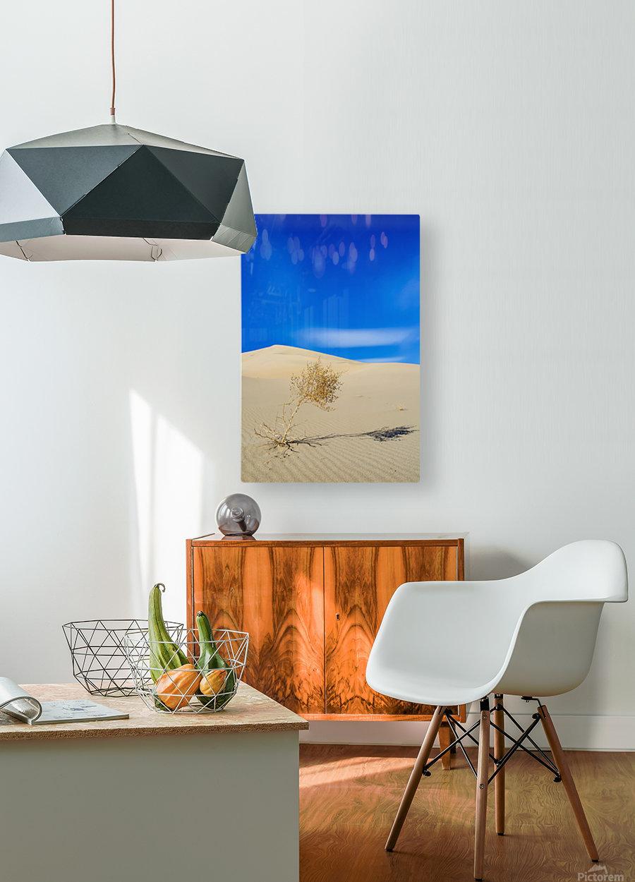 Survivor  HD Metal print with Floating Frame on Back