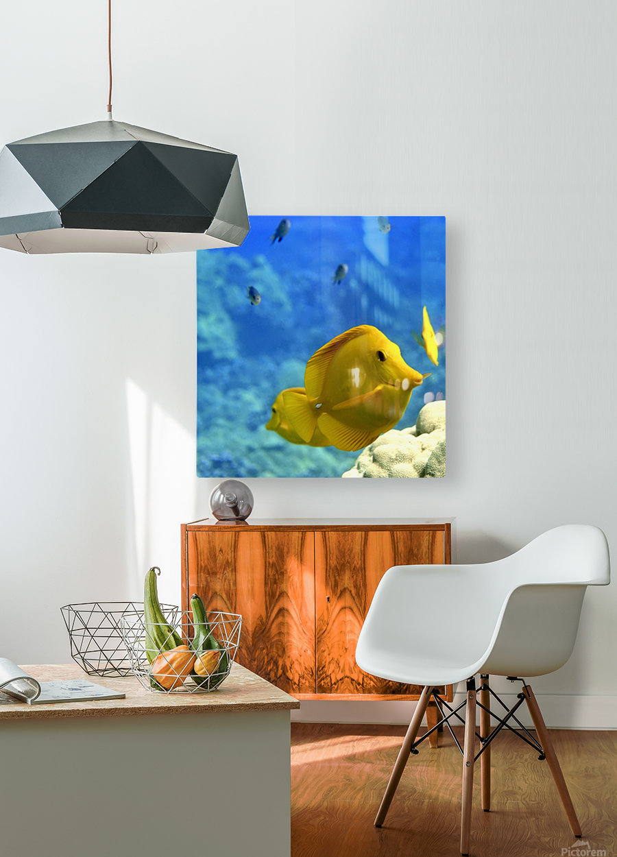 Yellow  a yellow tang   HD Metal print with Floating Frame on Back