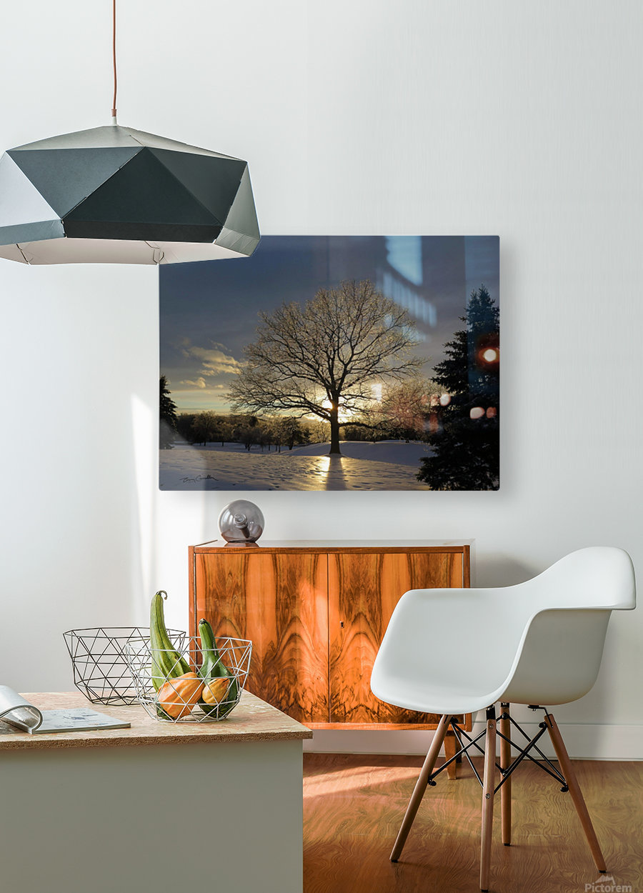 Winter Oak  HD Metal print with Floating Frame on Back