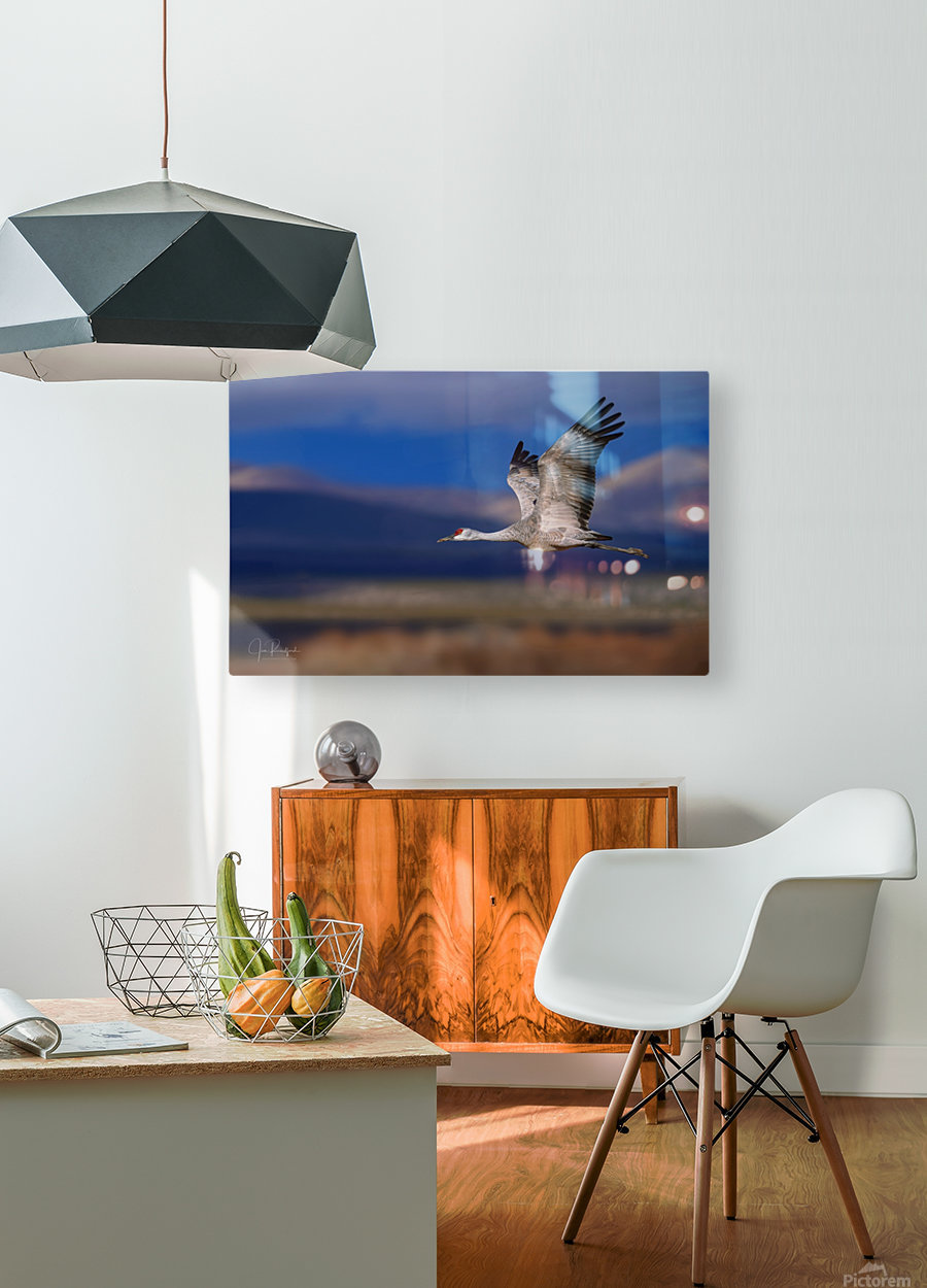 Crane over the Bosque  HD Metal print with Floating Frame on Back