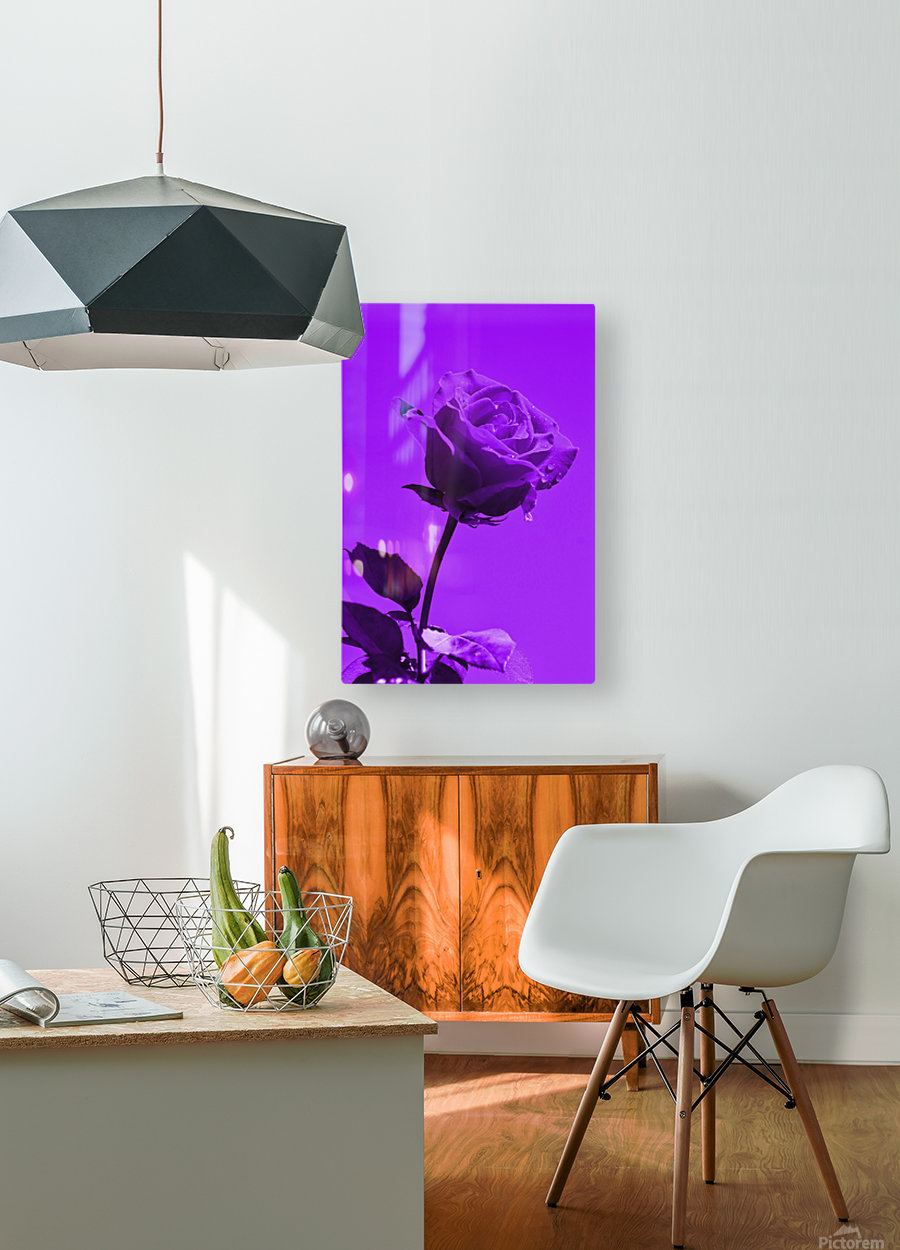 Love Rose purple 8665  HD Metal print with Floating Frame on Back
