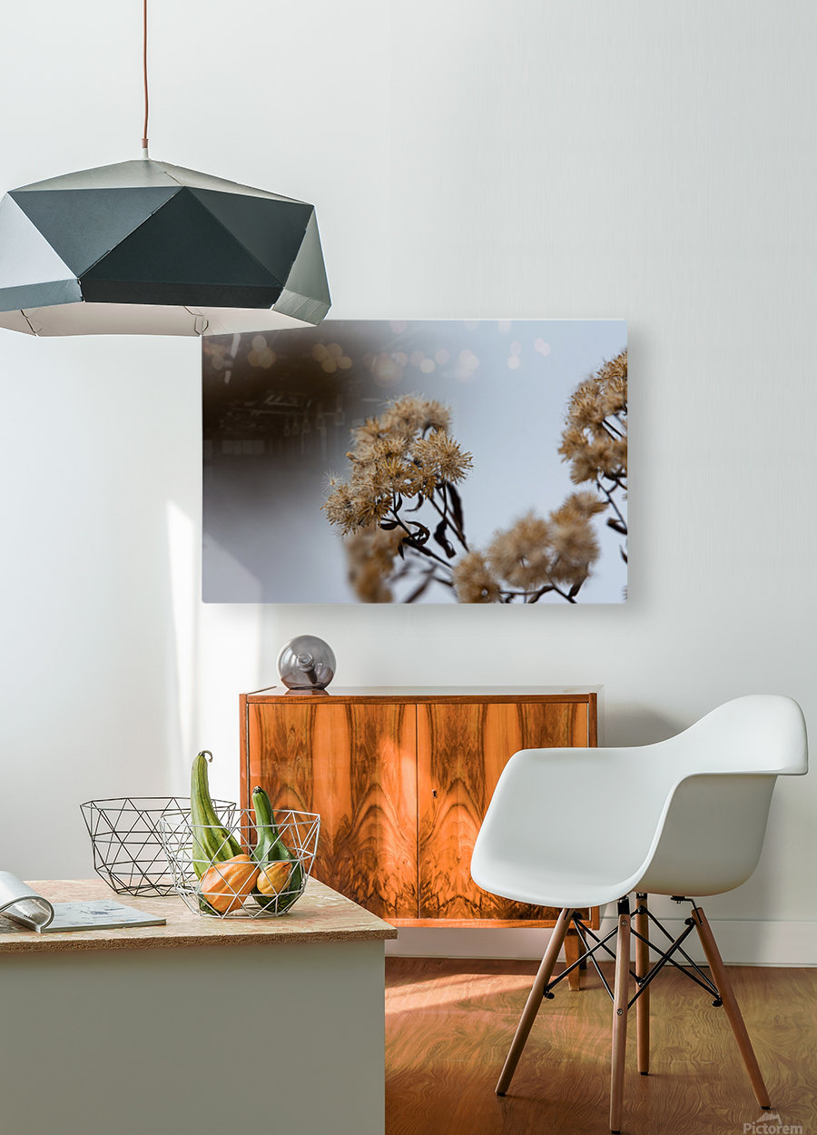 Winter Flowers  HD Metal print with Floating Frame on Back