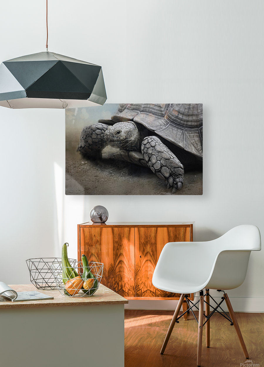 Galapagos Gentle Giant   HD Metal print with Floating Frame on Back