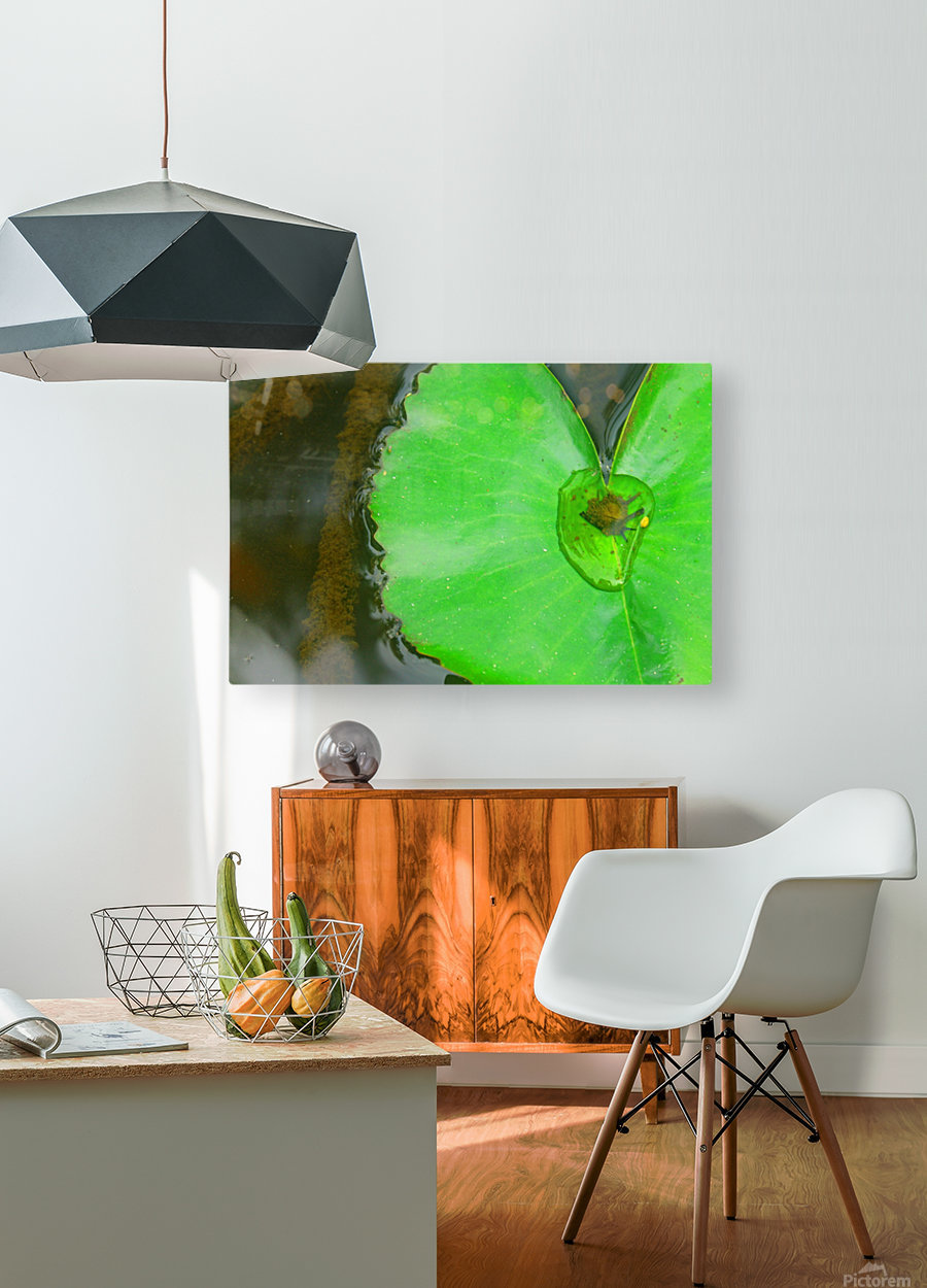 Lily Pad  HD Metal print with Floating Frame on Back