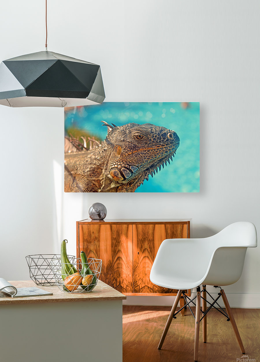 Spiny-Tailed Iguana  HD Metal print with Floating Frame on Back