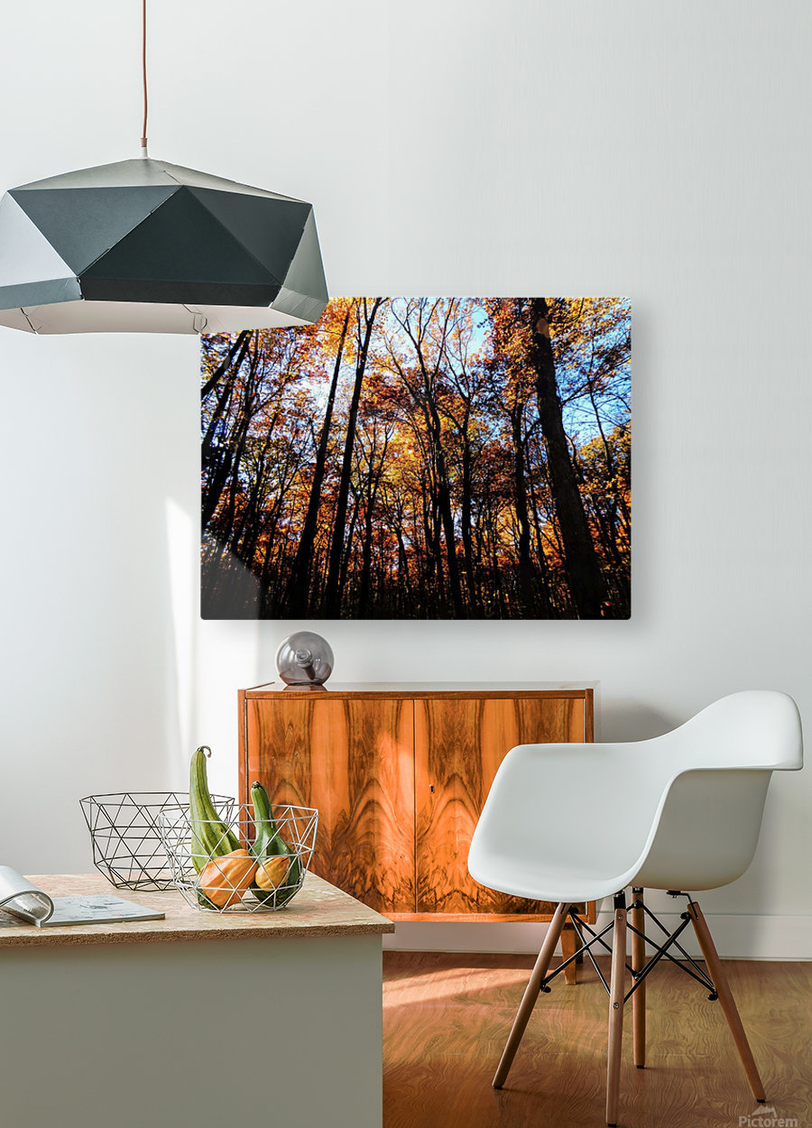 Golden Autumn  HD Metal print with Floating Frame on Back