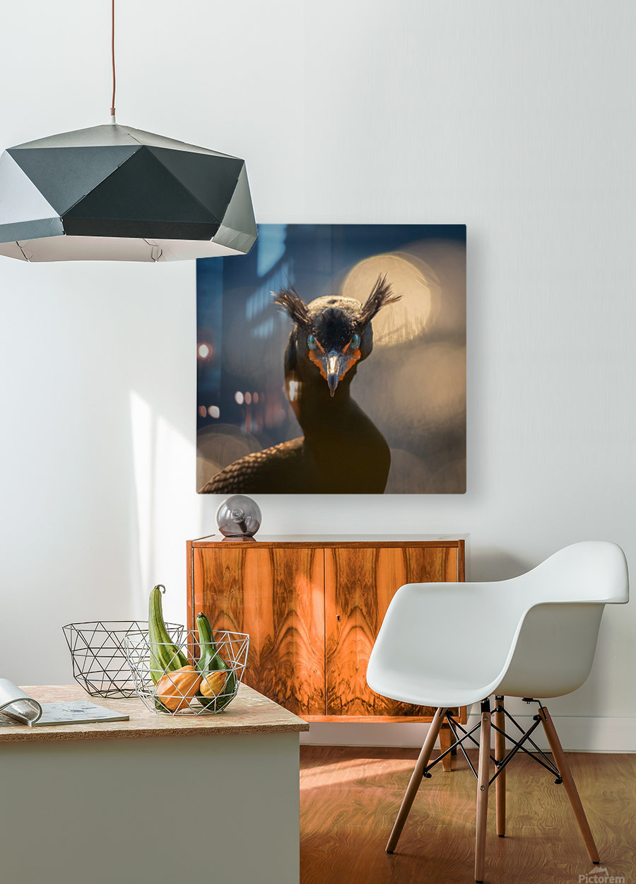 A stern look  HD Metal print with Floating Frame on Back