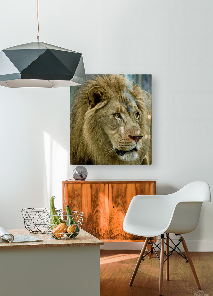 Extreme close up Lion  HD Metal print with Floating Frame on Back