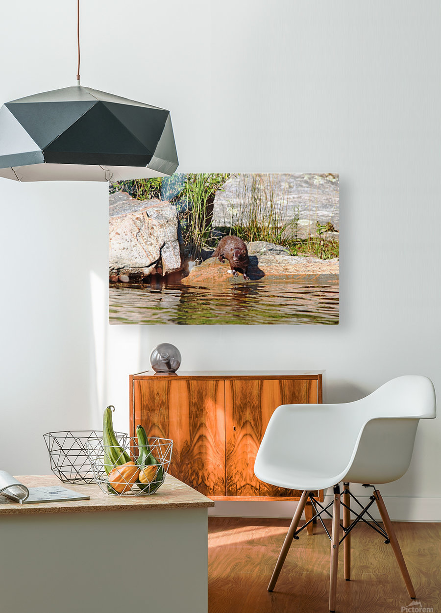 Curiousity  HD Metal print with Floating Frame on Back