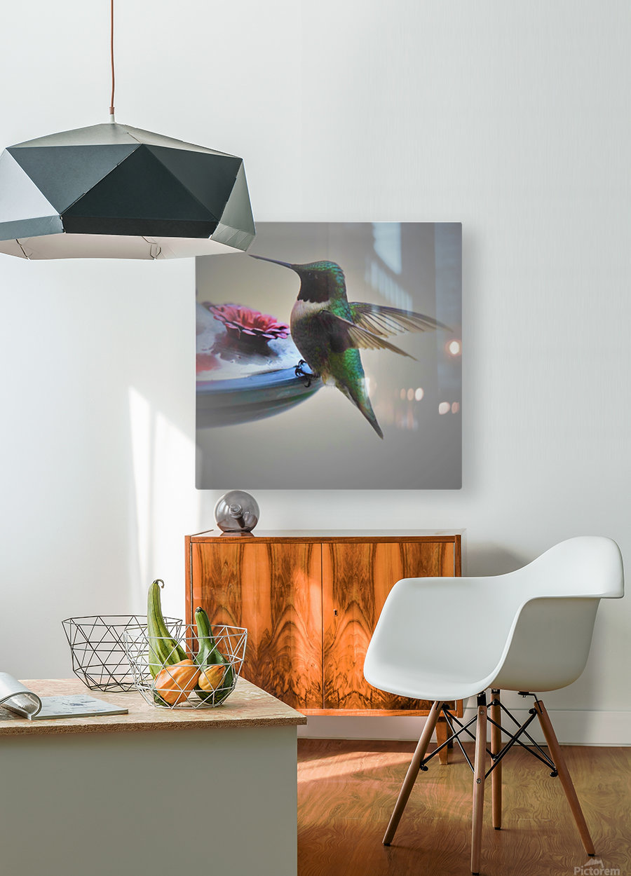 Colibris  HD Metal print with Floating Frame on Back