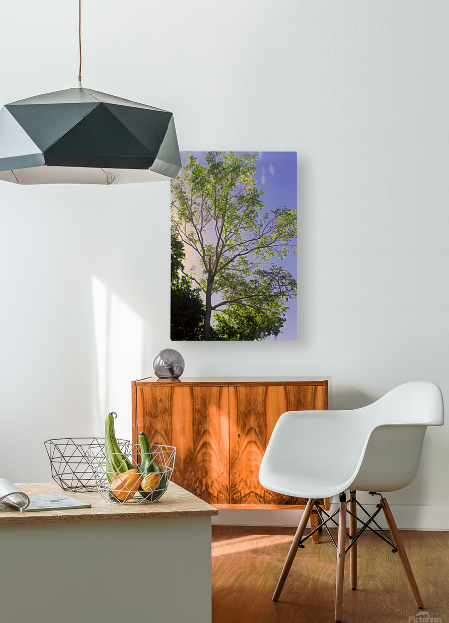 Touching the Sky  HD Metal print with Floating Frame on Back