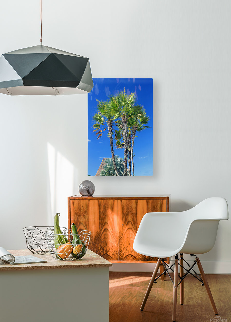 Growing to the Sky  HD Metal print with Floating Frame on Back