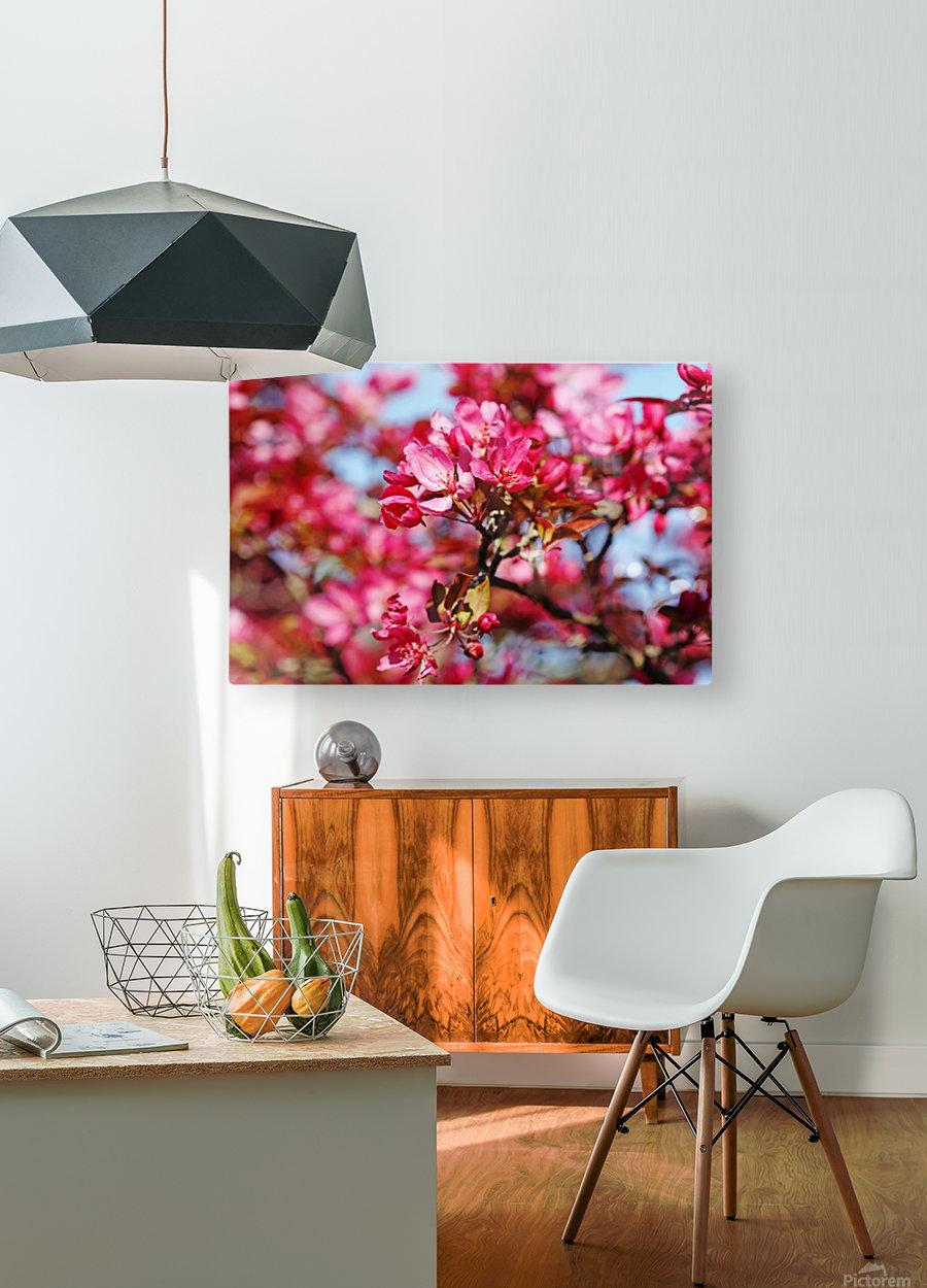Crabapple Pink  HD Metal print with Floating Frame on Back