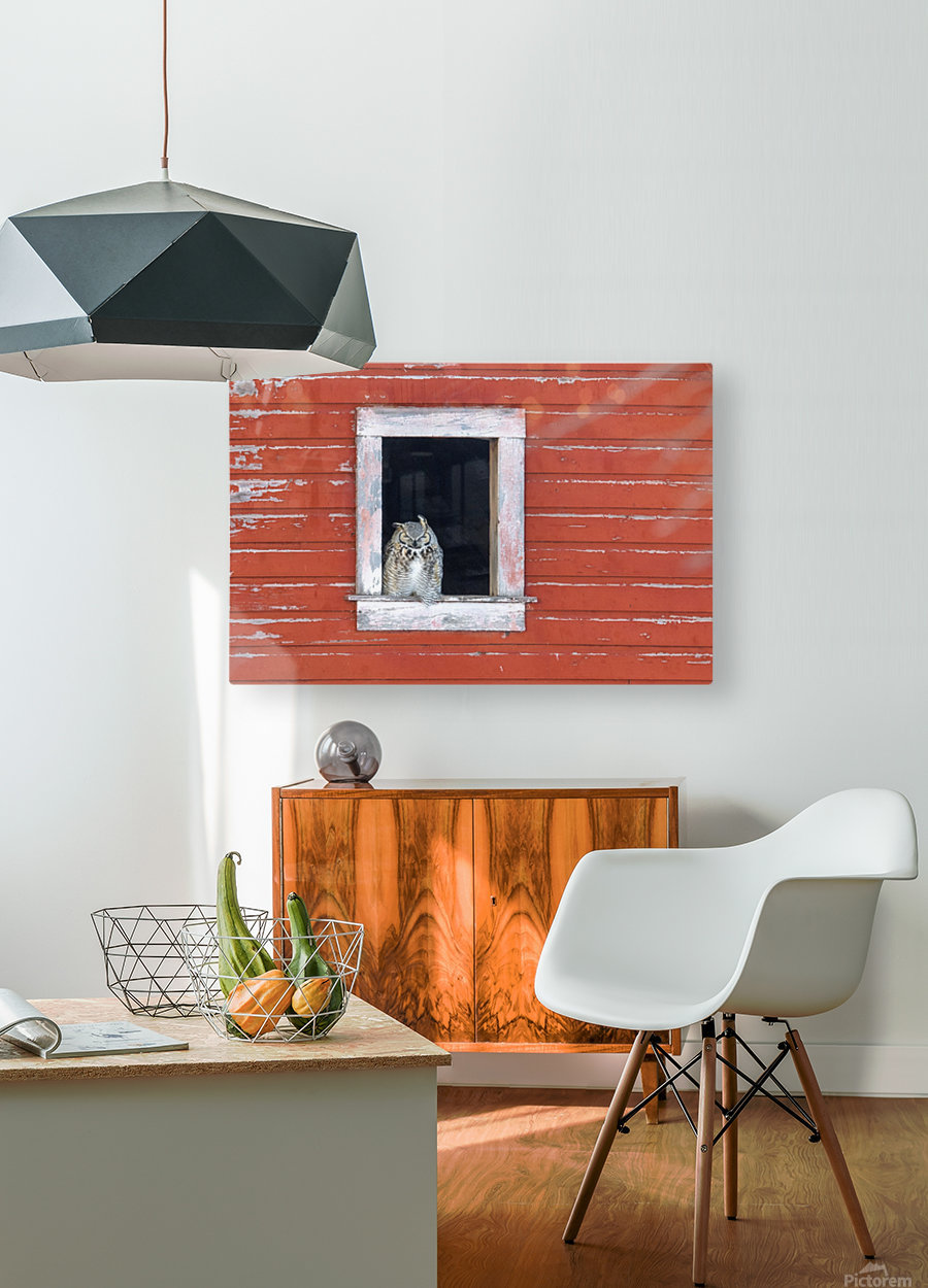 Great Horned Owl - Red Barn  HD Metal print with Floating Frame on Back