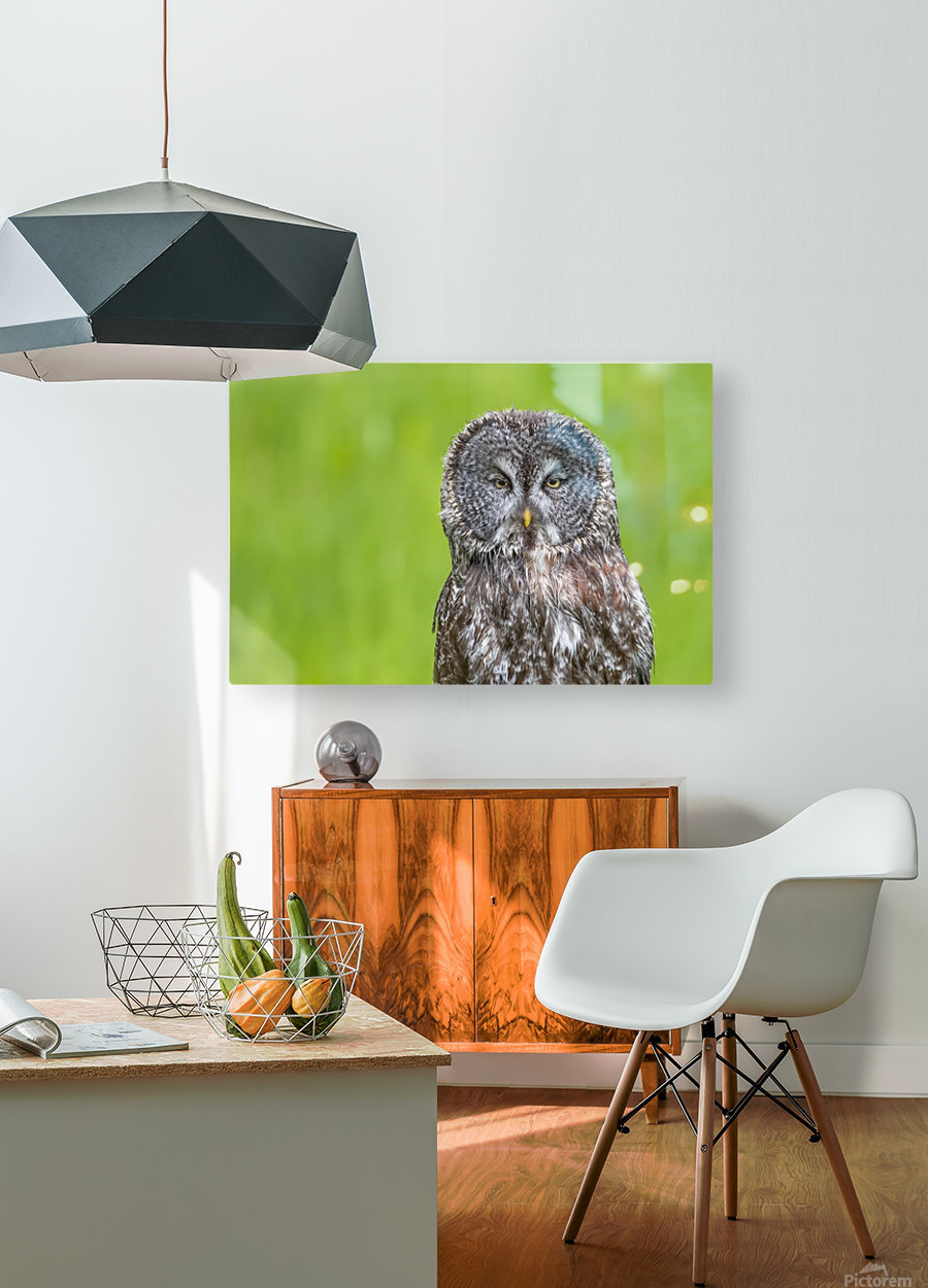 Great Grey Owl - Grey on Green  HD Metal print with Floating Frame on Back