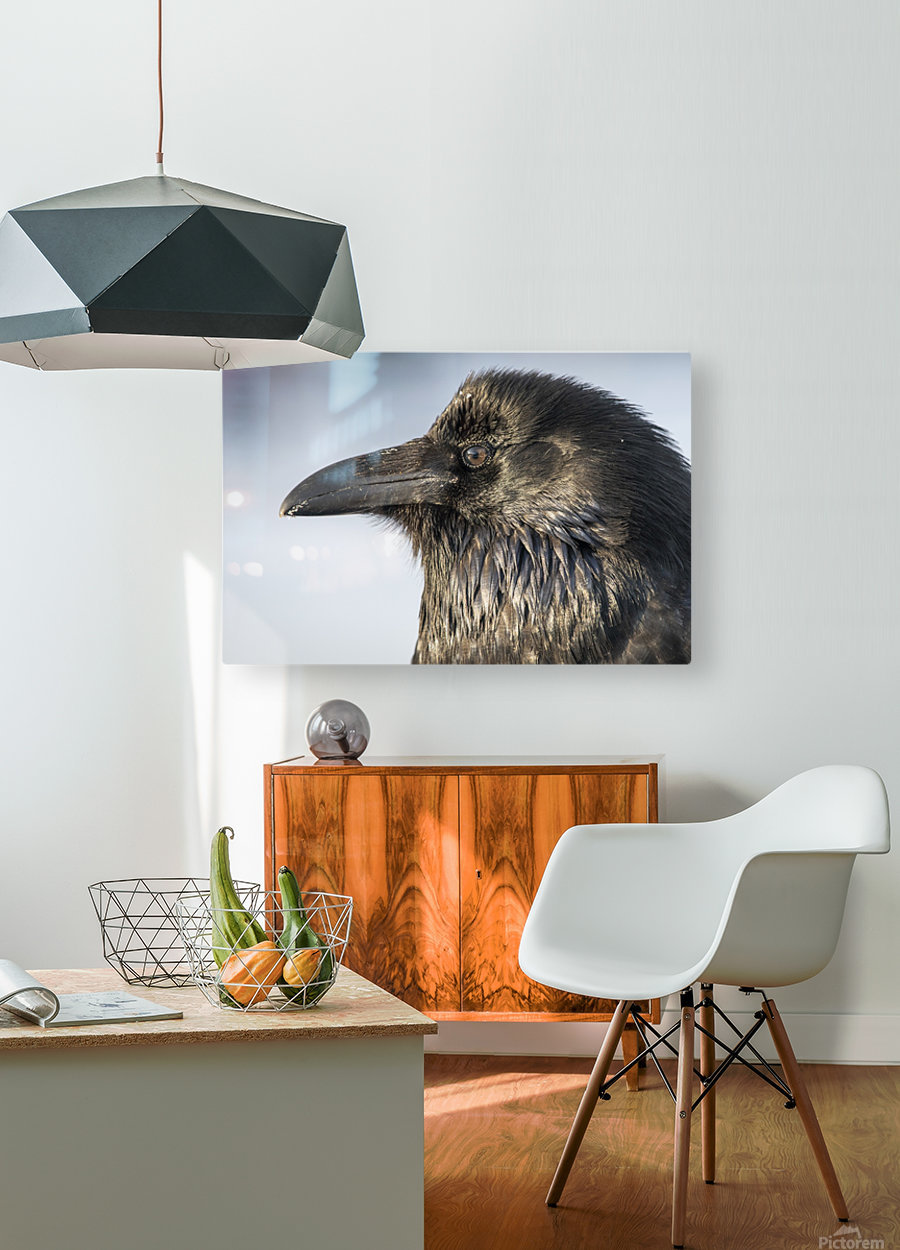 Raven - Up Close  HD Metal print with Floating Frame on Back