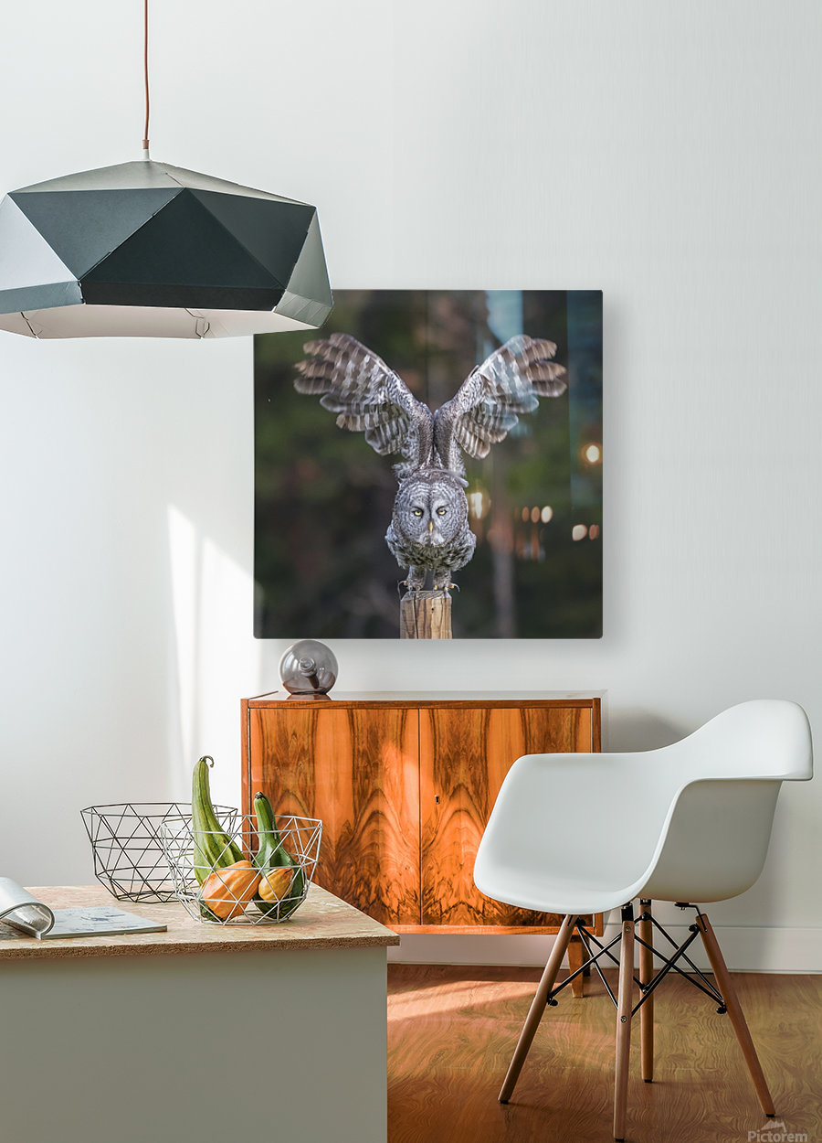 Great Grey Owl - Cleared for Take Off  HD Metal print with Floating Frame on Back