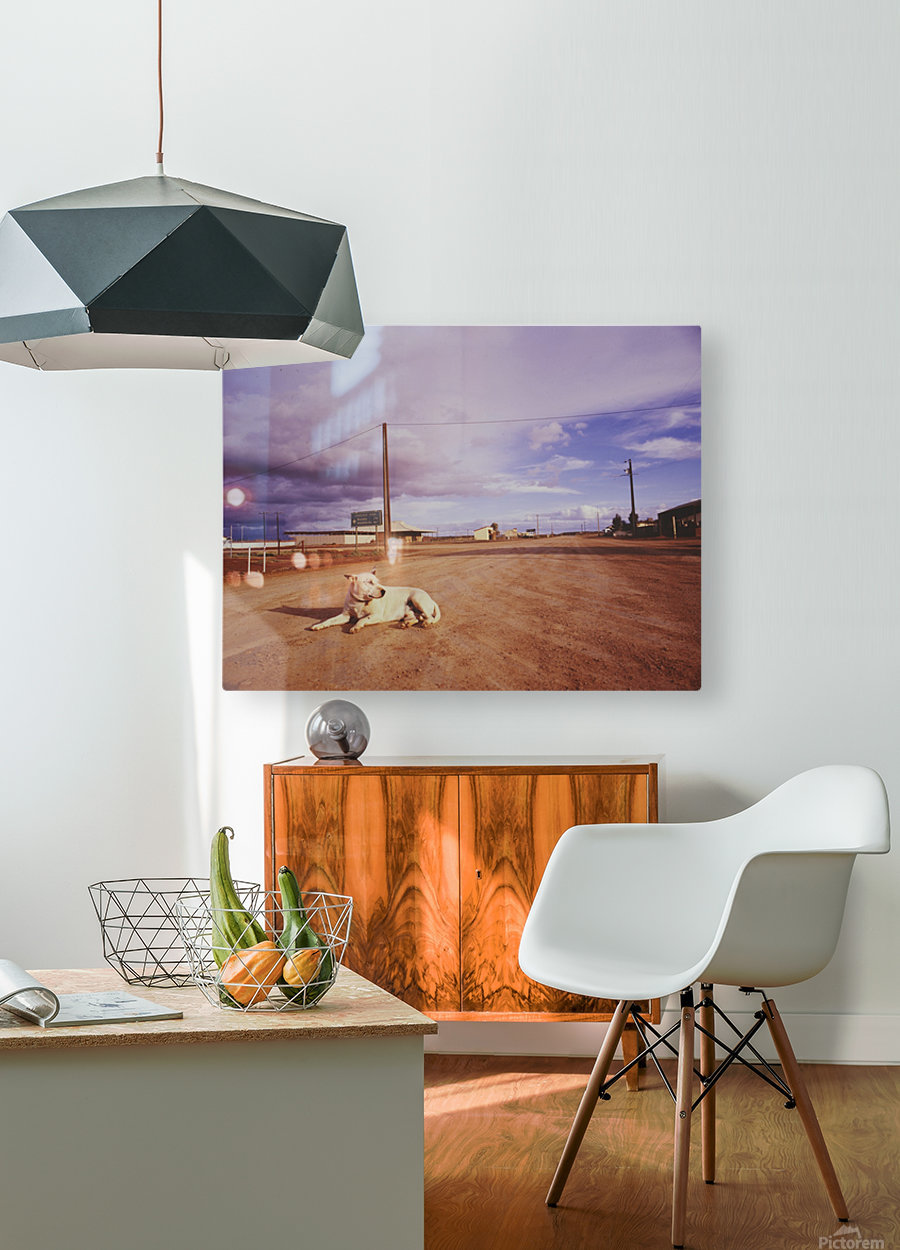 Lone dog in Outback town Australia  HD Metal print with Floating Frame on Back