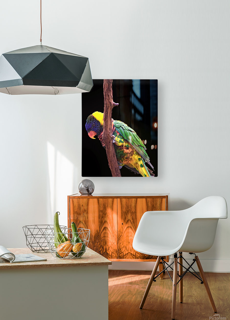 Colorful Bird on branch  HD Metal print with Floating Frame on Back