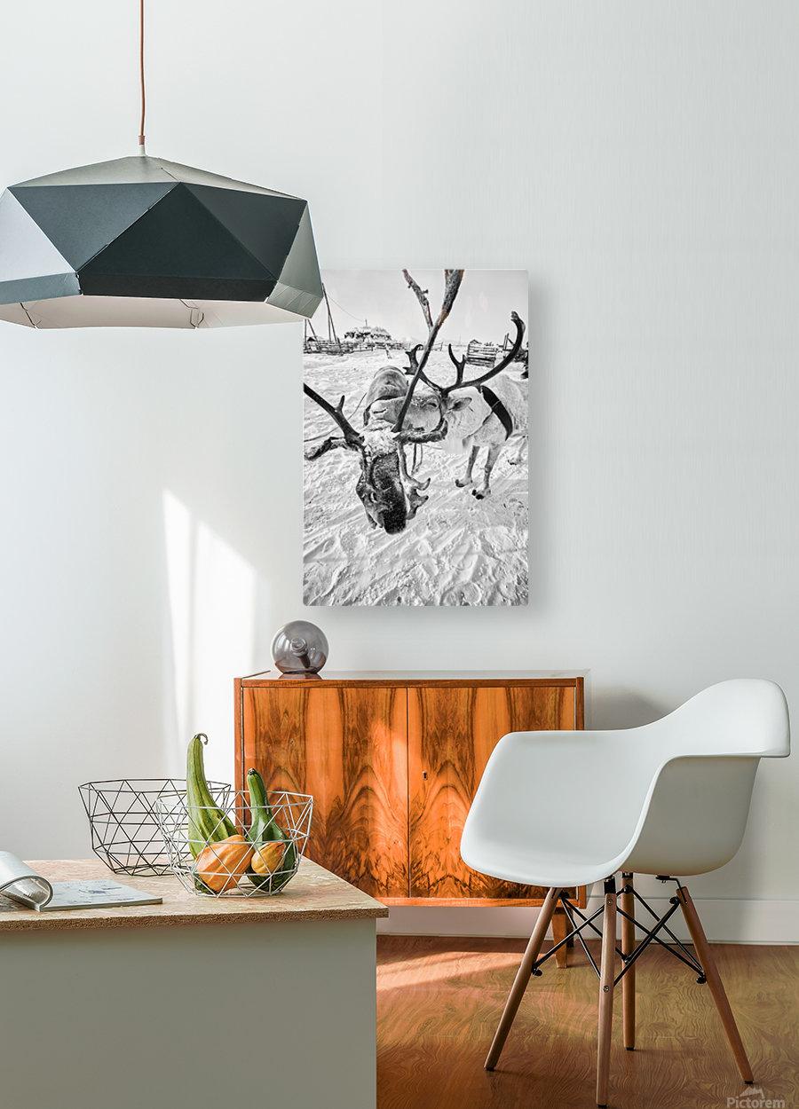 Evenki Reindeer Herding  HD Metal print with Floating Frame on Back
