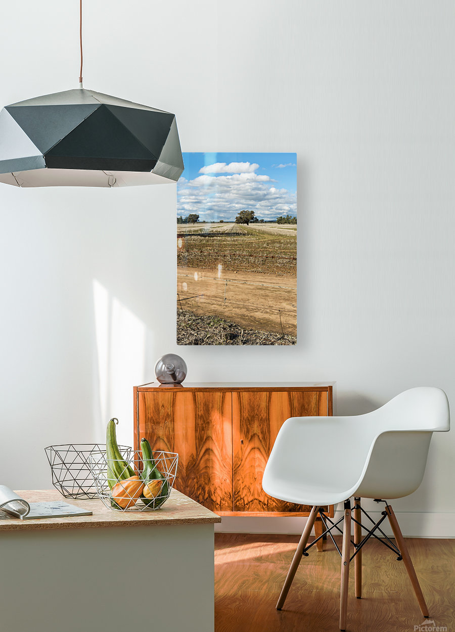 Stubble fields post harvest against blue sky and clouds.  HD Metal print with Floating Frame on Back