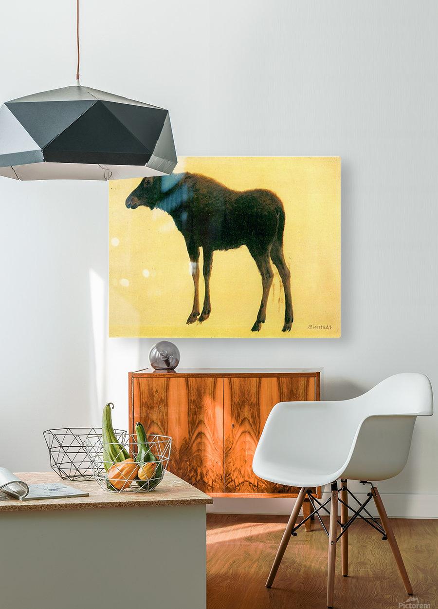 Elk by Bierstadt  HD Metal print with Floating Frame on Back