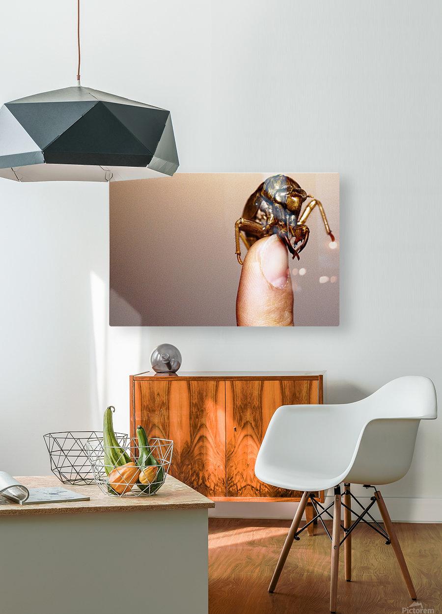Golden Molt  HD Metal print with Floating Frame on Back