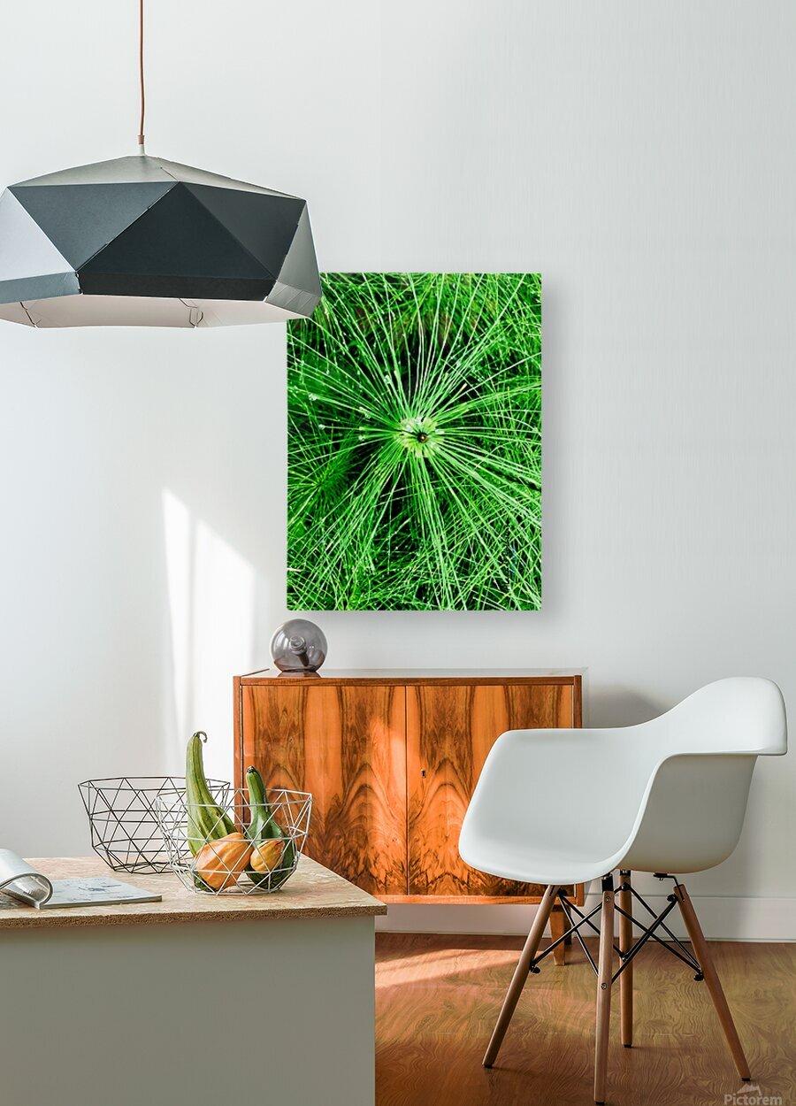 BOTANICA  HD Metal print with Floating Frame on Back