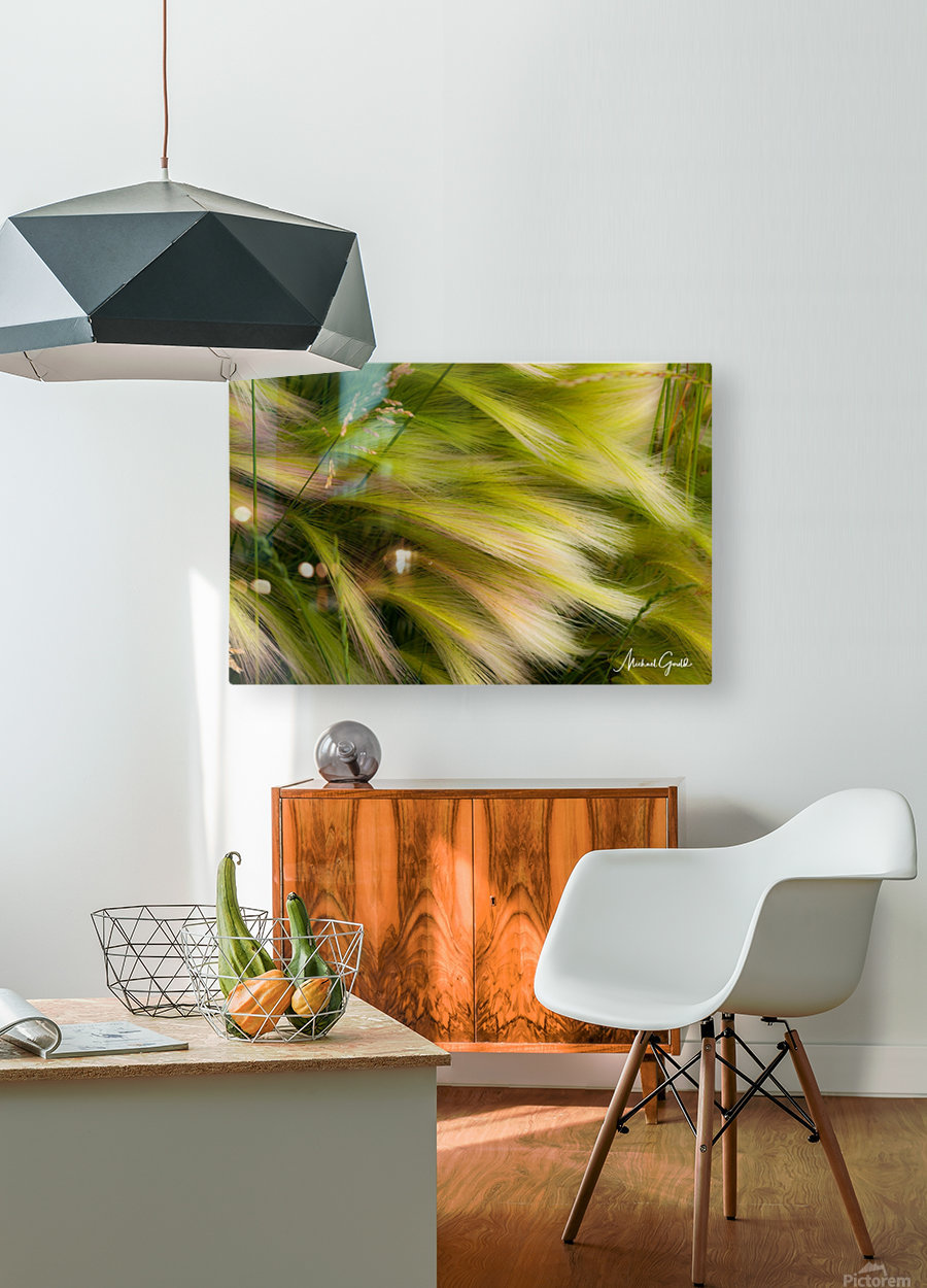 Grasses Of Summer  HD Metal print with Floating Frame on Back