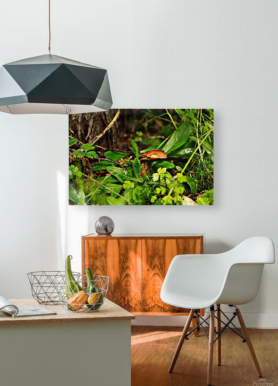 Mushrooms  HD Metal print with Floating Frame on Back