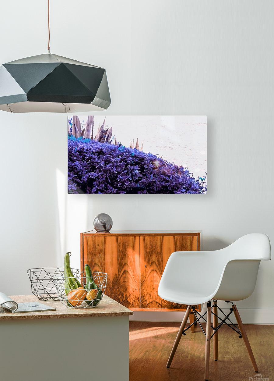 Dancing Violet   HD Metal print with Floating Frame on Back