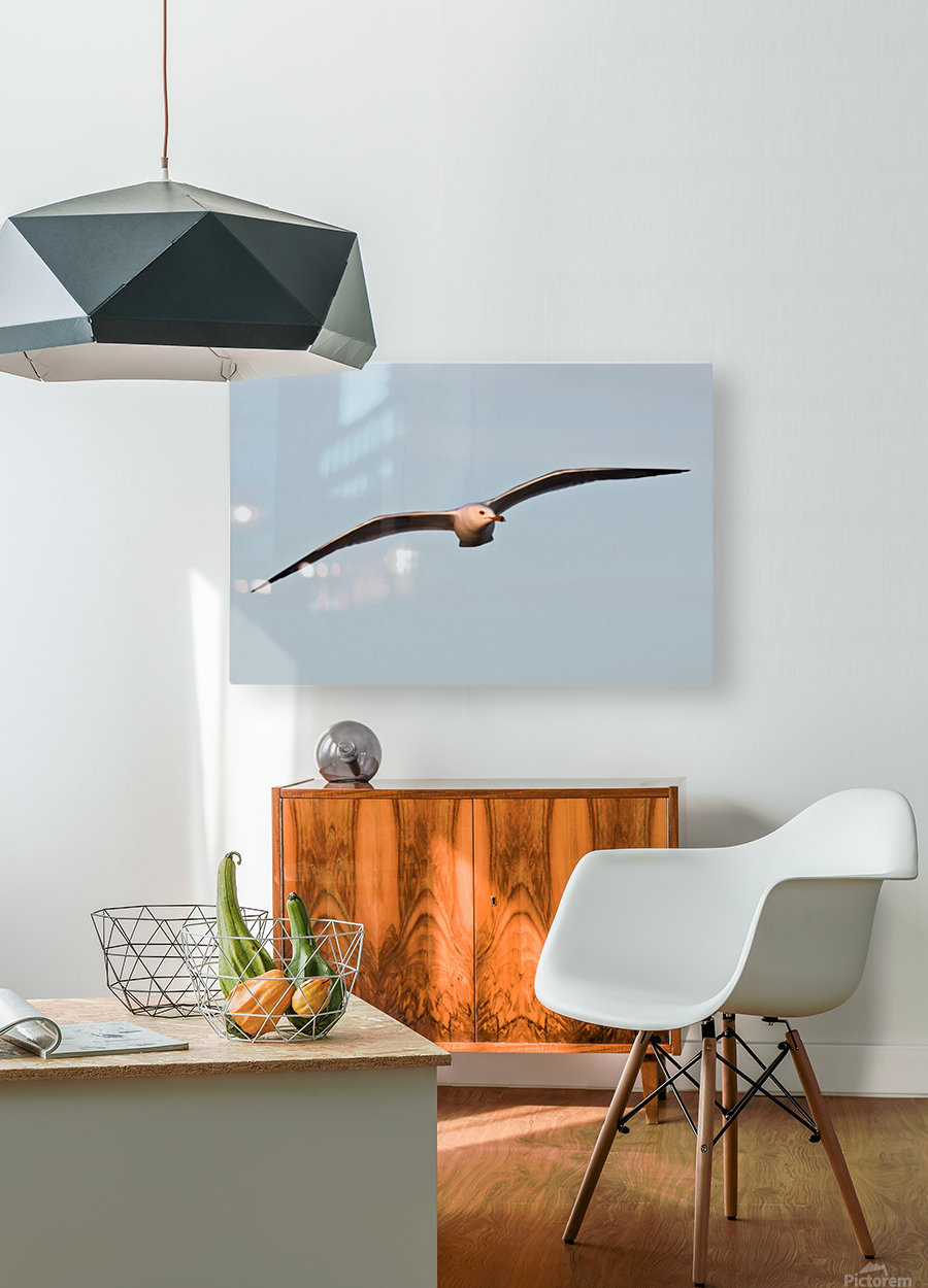 Fly like a Seagull  HD Metal print with Floating Frame on Back