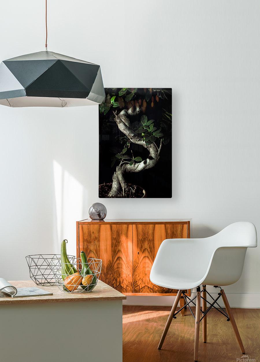 old bonsai black background  HD Metal print with Floating Frame on Back