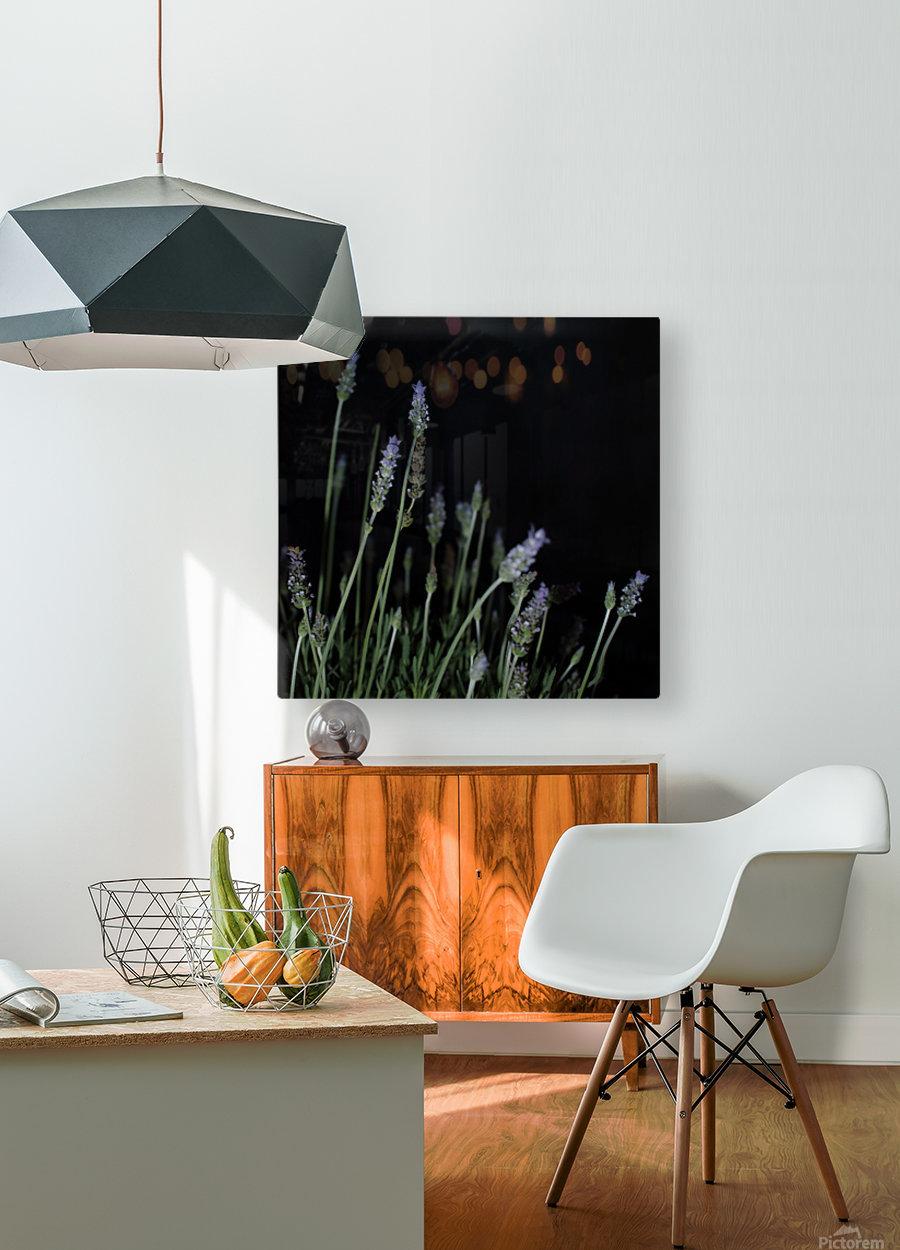 plant flower lavender black background  HD Metal print with Floating Frame on Back